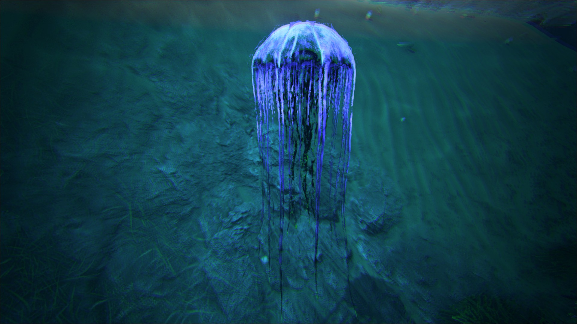 The Cnidaria Has No Changeable Color Regions