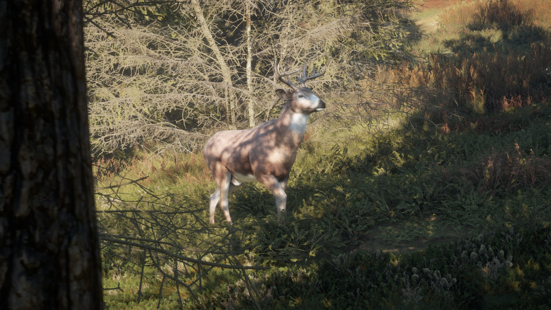 Fotografie della vostra Fauna su Call Of The Wild 460C7A9D7C22D5F4F154F0D9E69F59B5D6D38180