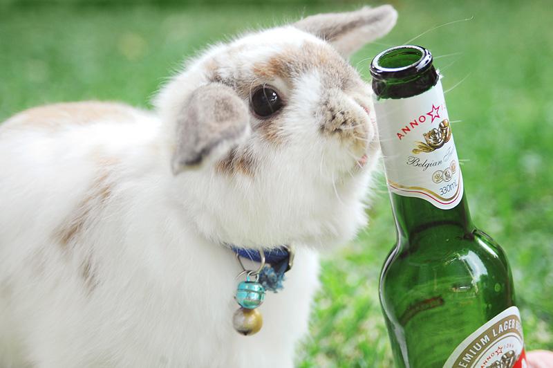 сообщество Steam Bunny Loves Beer