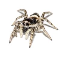 Enhanced Spiders画像