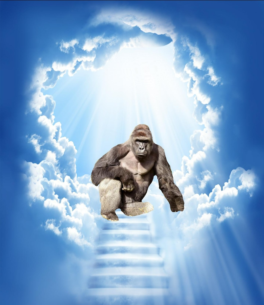 Steam Community :: :: Harambe in Heaven