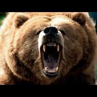 Man with Bear Voice画像