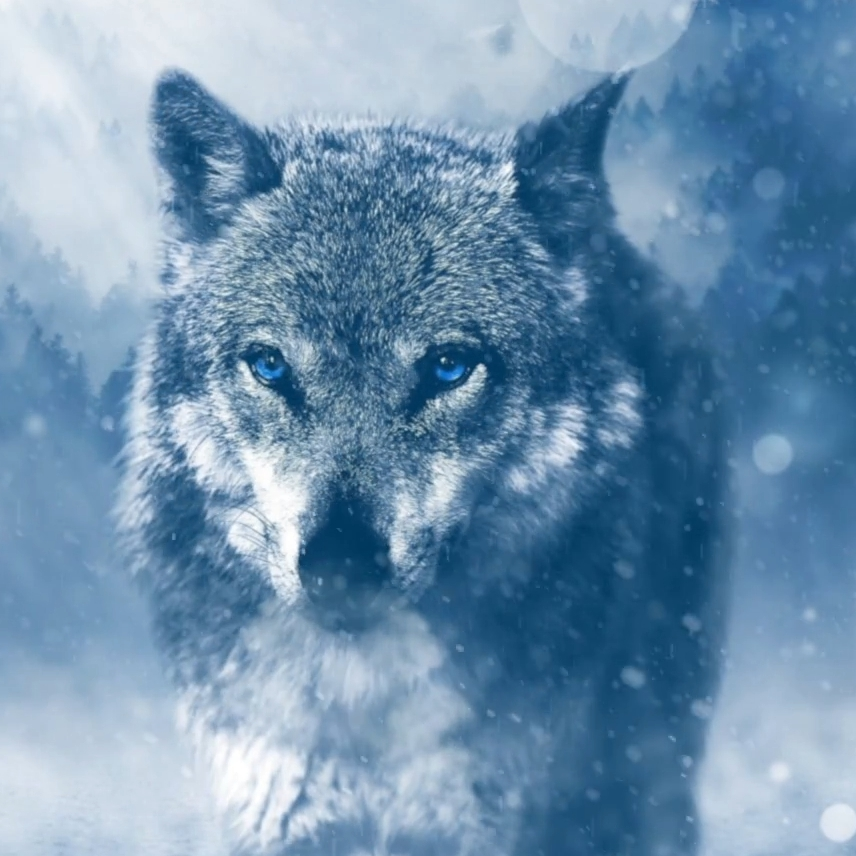 Wolf Stare Wallpaper Engine