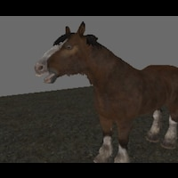 FREDDY DA HORSE!!!画像