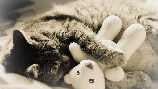 Картинки котик спит с игрушкой