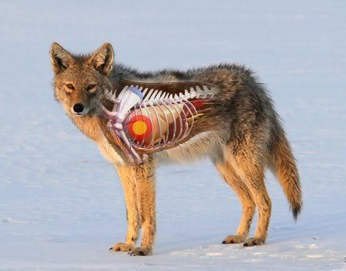 Wolf Kill Zone Diagram Auto Wiring Diagram Today