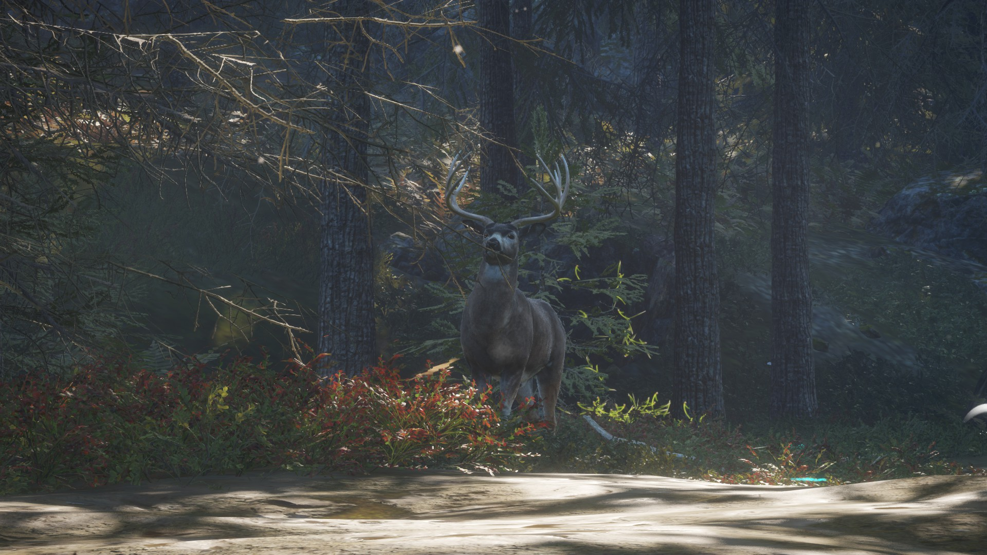 Steam munity Guide Every Animal in the Game Now Updated