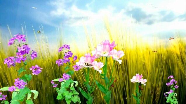 Steam Workshop Nature Flowers Full Hd 1080p 60fps