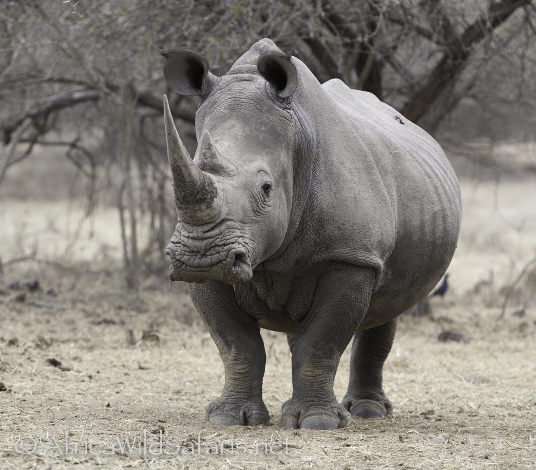 Change the language of rhino from chinese to english
