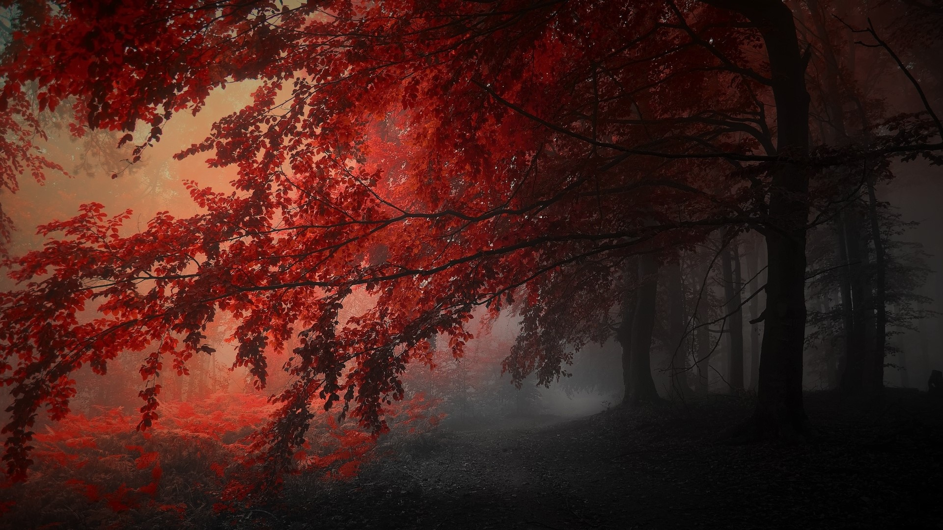 Crimson Forest Wallpaper Engine