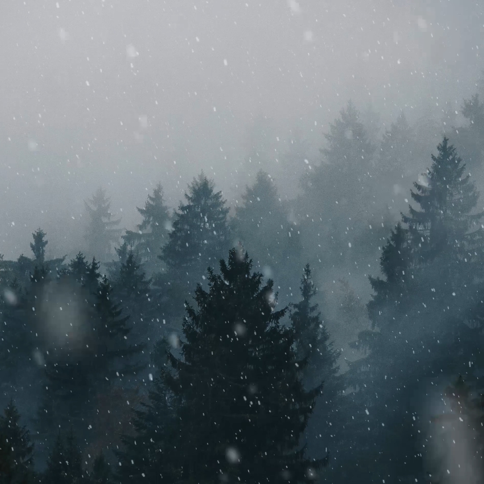 Steam Workshop 4k Animated Pubg Wallpaper: Steam Workshop :: Animated Forest Snow 4k