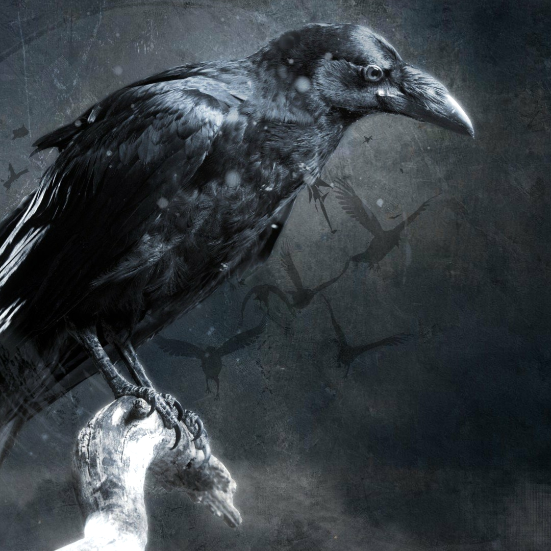 Steam Workshop Crow Wallpaper HD Wallpapers Download Free Images Wallpaper [1000image.com]