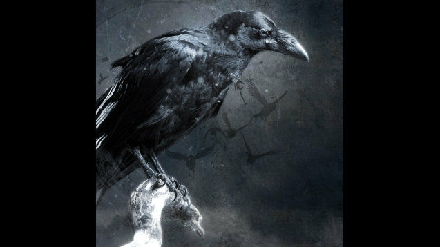 Steam Workshop Crow Wallpaper