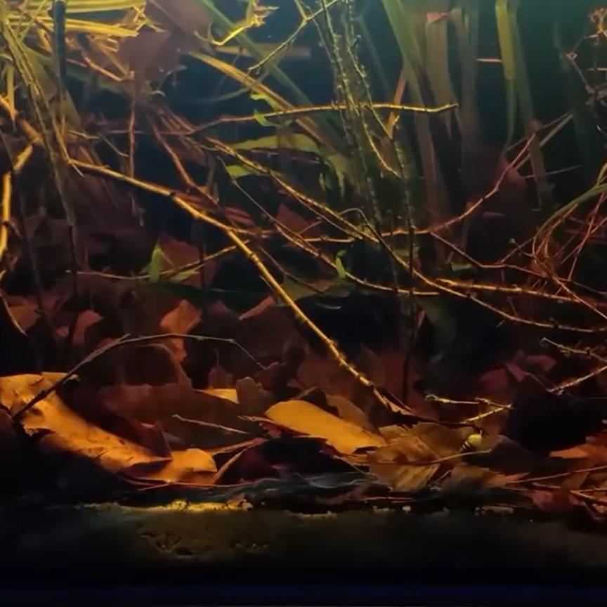Steam Workshop Blackwater Aquarium Fish