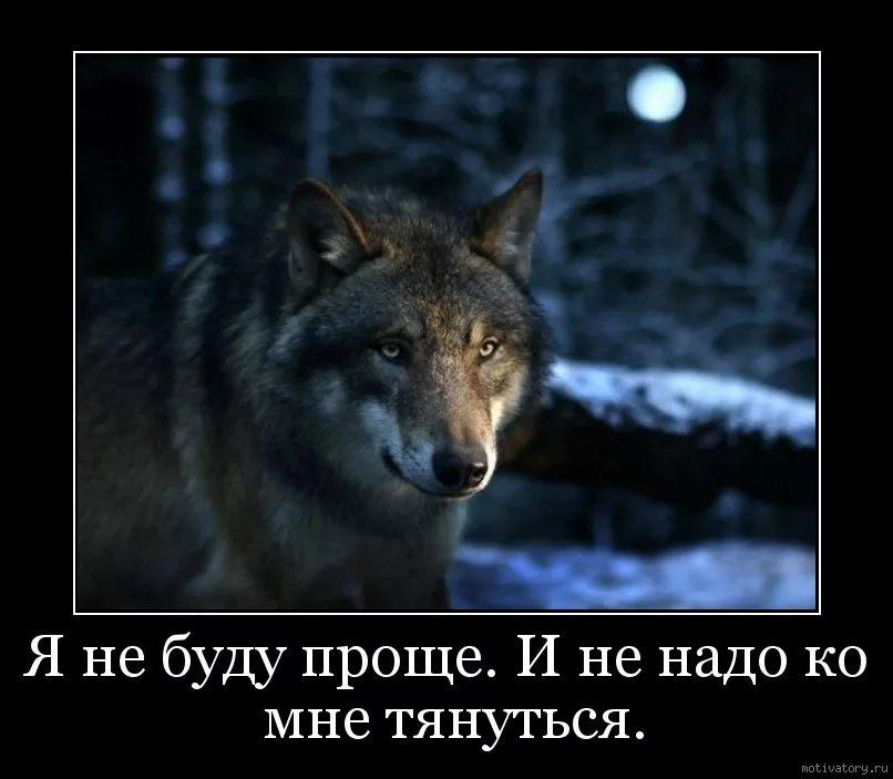 Картинка волк с надписью я не одинок я одиночка, надписью
