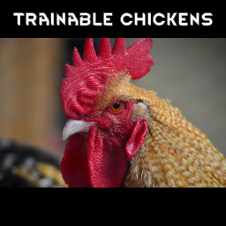 Trainable Chickens